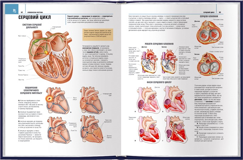 Анатомія людини