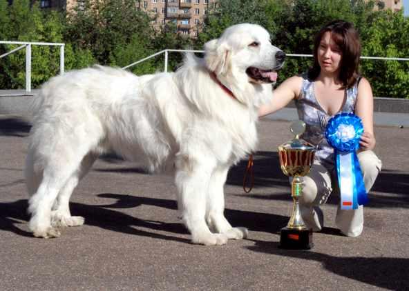 Животные.  0. самое-самое. большие собаки.